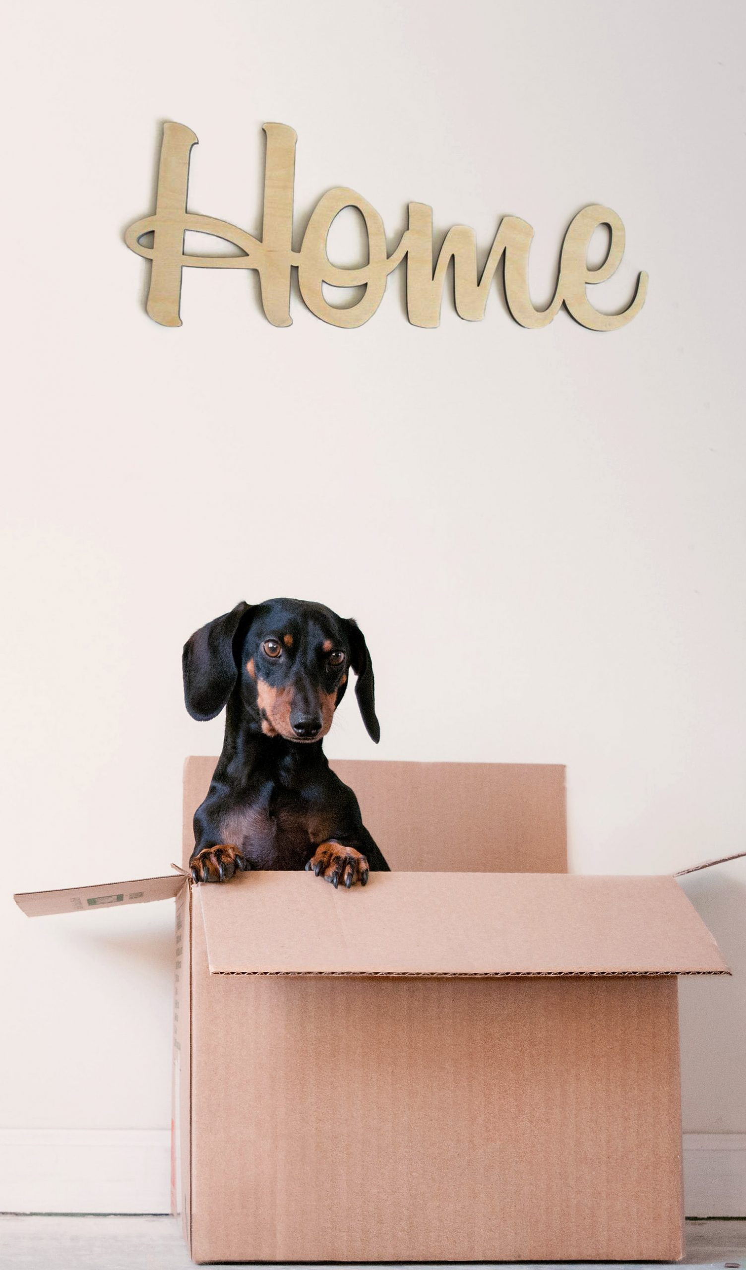 Daschund coming out of a box with a 'Home' sign on the wall.